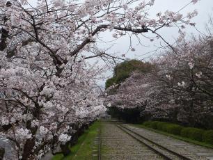 13.04.06 京都旅行 006