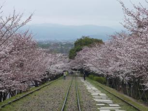 13.04.06 京都旅行 005