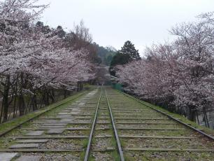 13.04.06 京都旅行 008