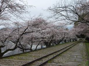13.04.06 京都旅行 007