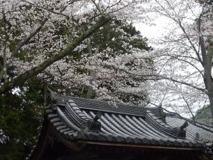 13.04.06 京都旅行 016