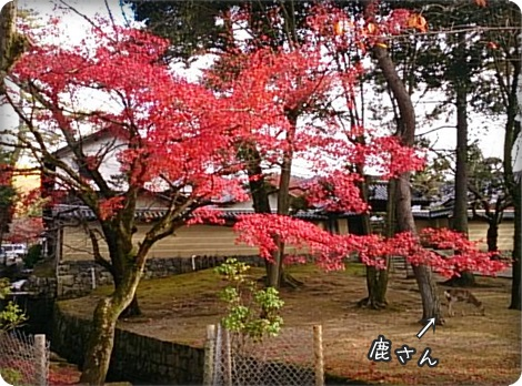 1127奈良