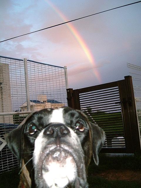 虹とラン2