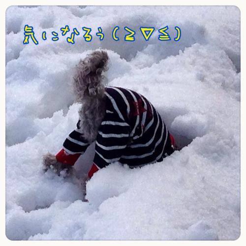 蜀咏悄012306_convert_20140122164553