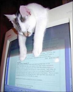 パソコン上で寝る猫nn20