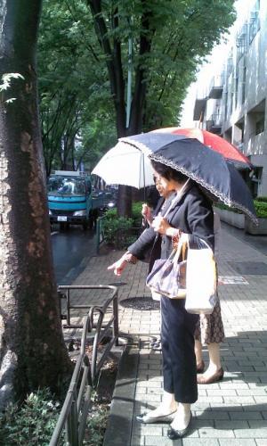 雨上がり中杉通り視察
