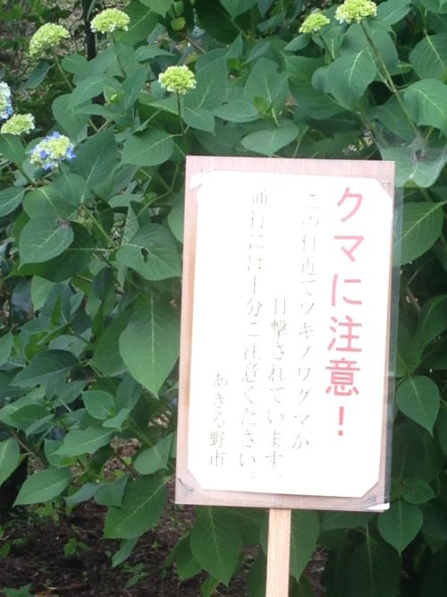 azisaiyama14_20130606201906.jpg
