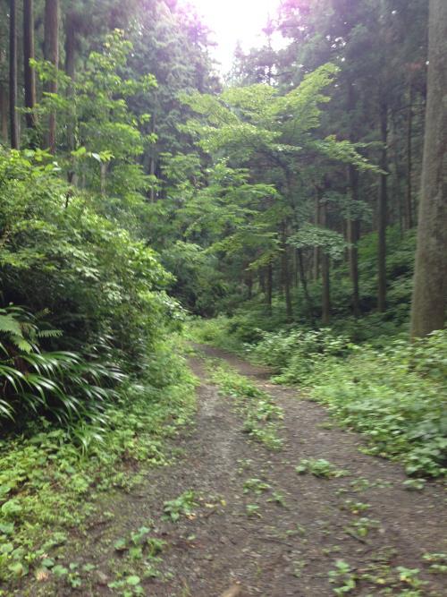 hinokiyamaro09.jpg