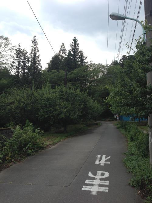 hinokiyamaro16.jpg