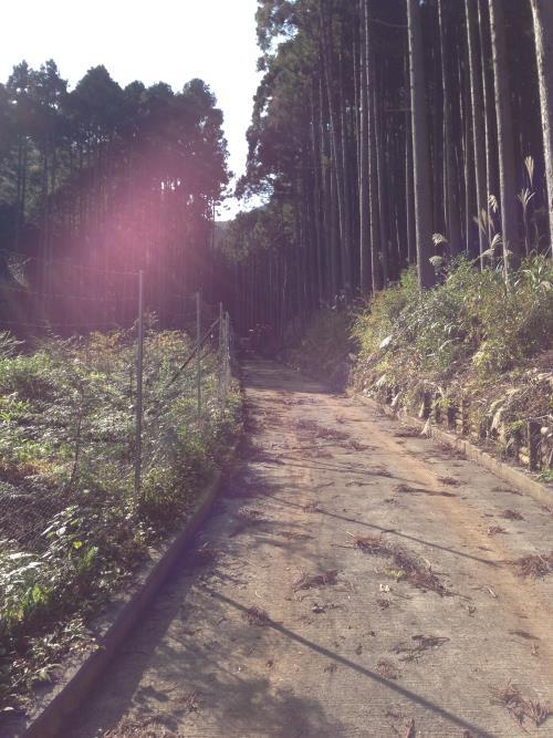 inoshishiA12.jpg