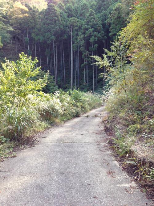 inoshishiA34.jpg