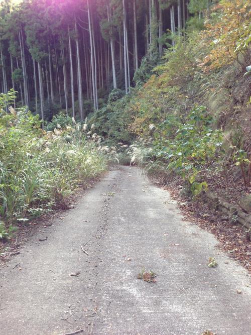 inoshishiA36.jpg