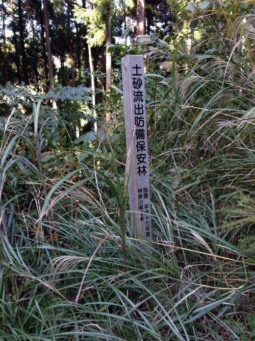 inoshishiA37.jpg
