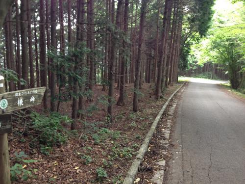 okumusaB15.jpg