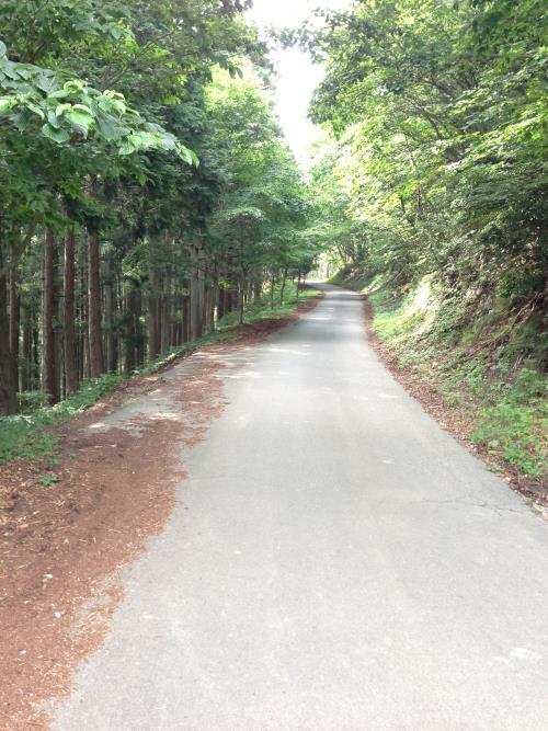okumusaB20.jpg