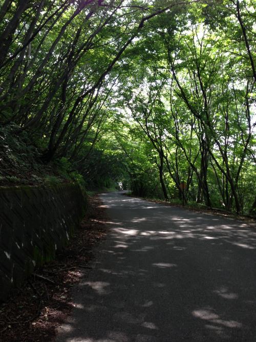 okumusaB33.jpg