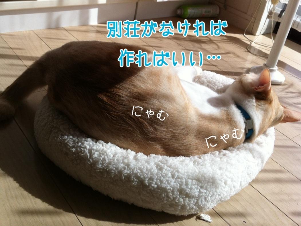 20131017144503f8b.jpg