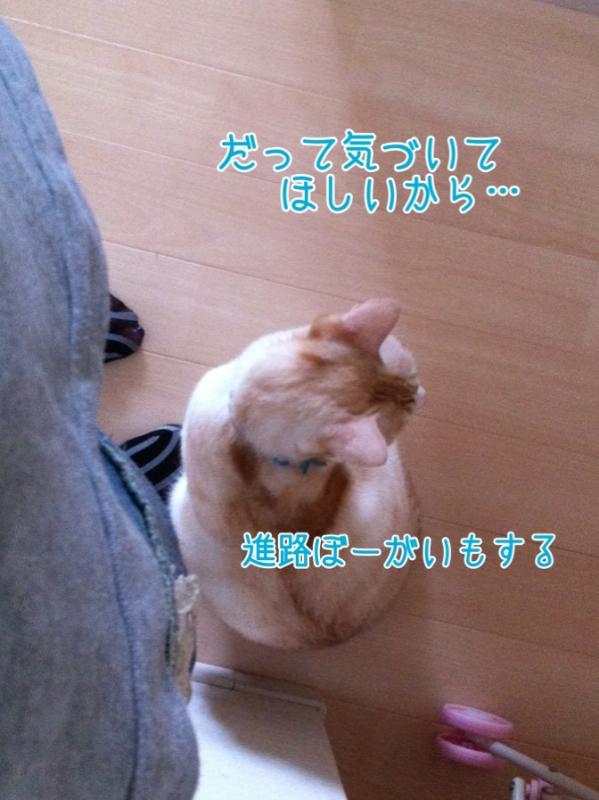 2013110621591107e.jpg