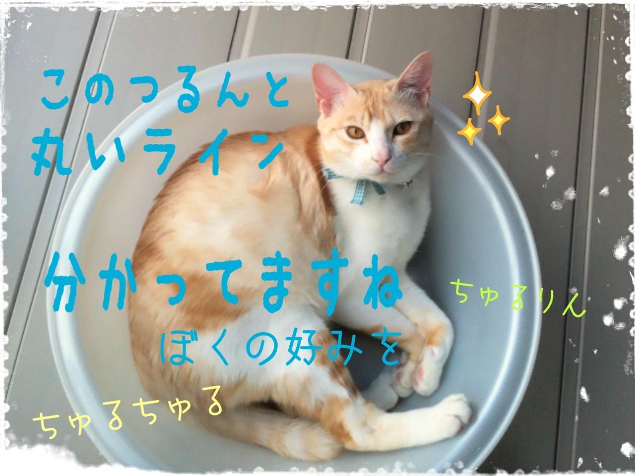 image_20130704155647.jpg