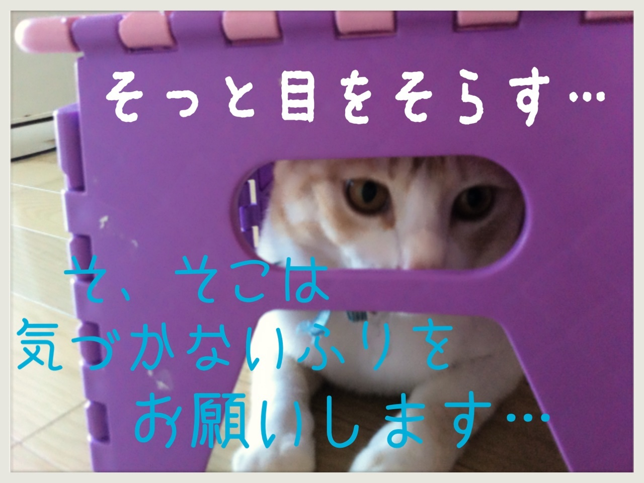 image_20130706222612.jpg