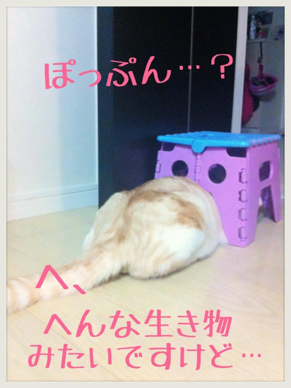 image_20130706222618.jpg