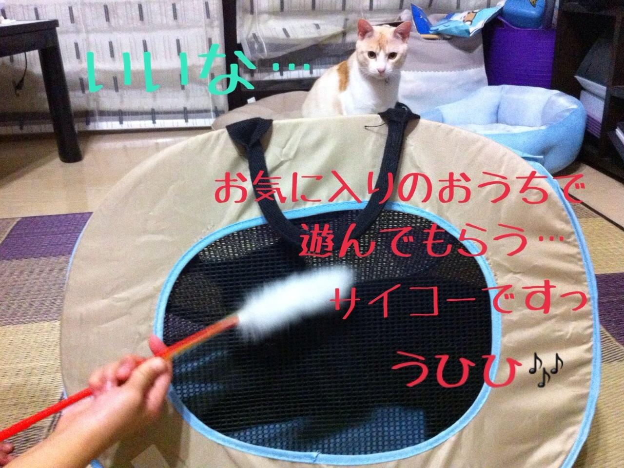 image_20130709152906.jpg