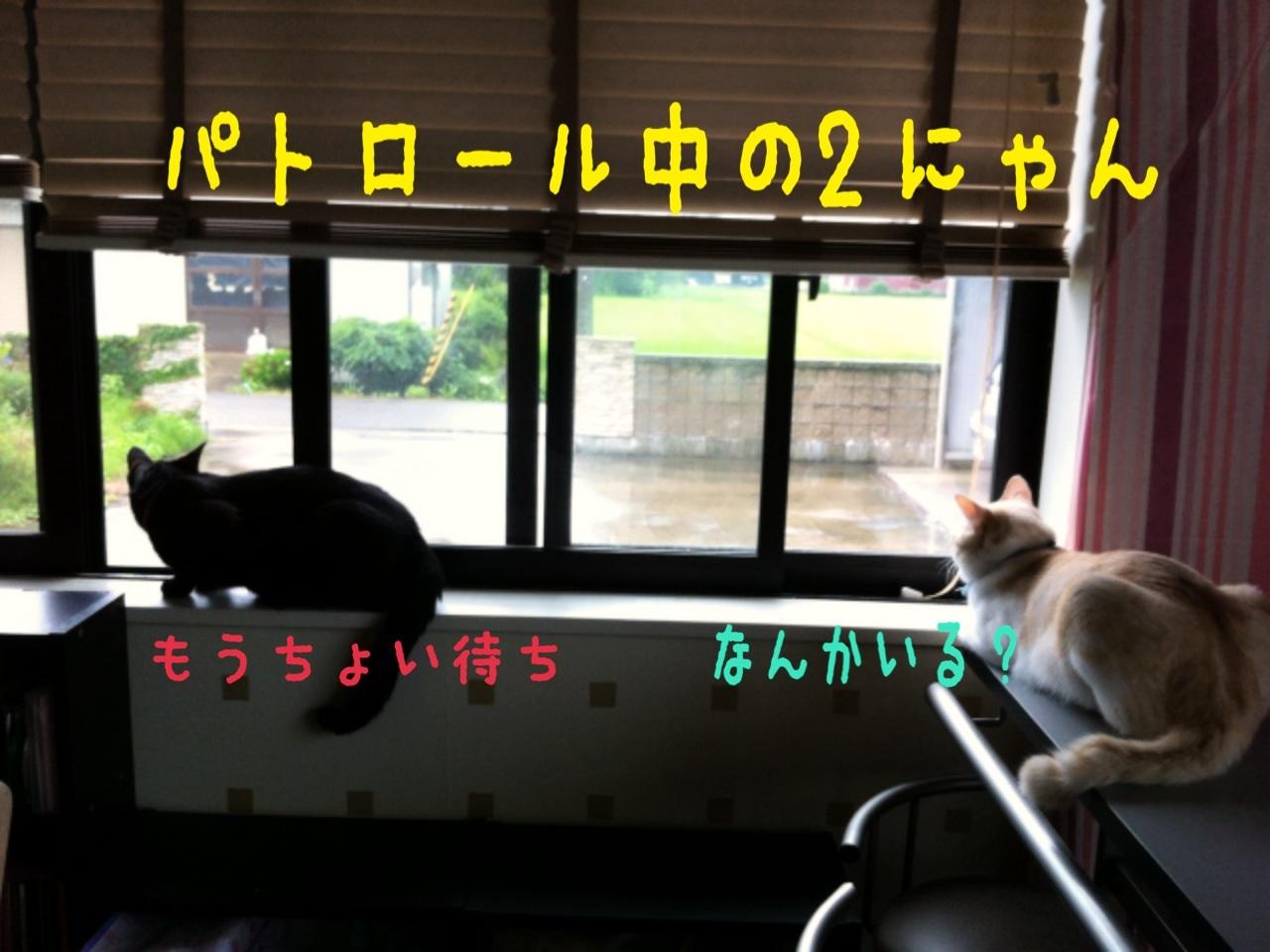 image_20130718193333.jpg