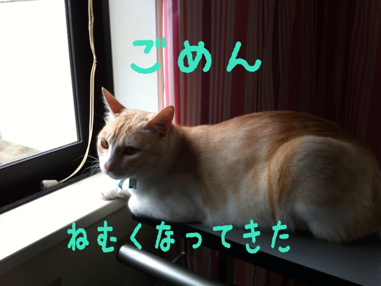image_20130718193336.jpg