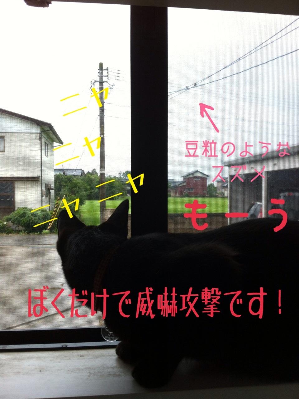 image_20130718193337.jpg
