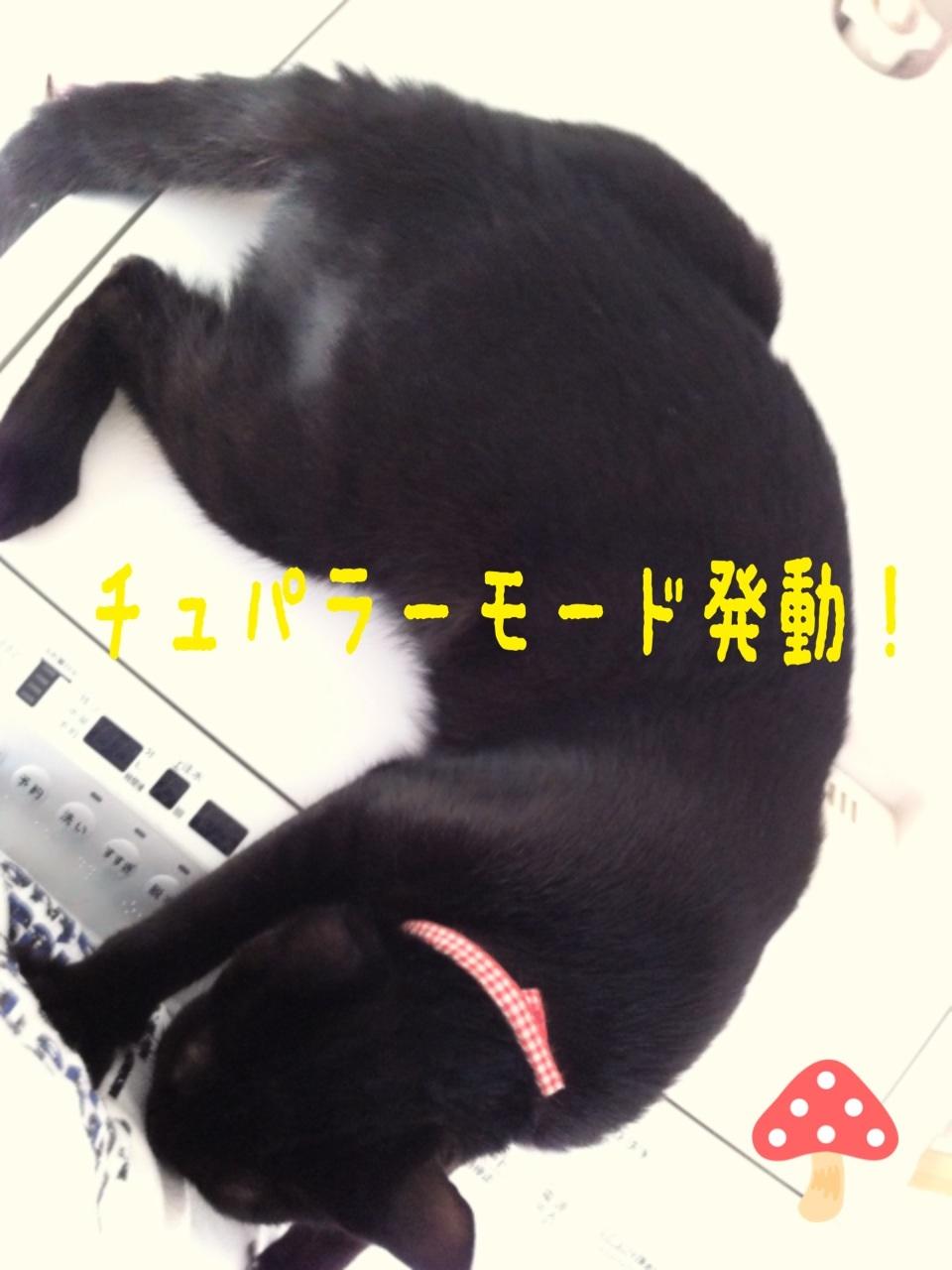 image_20130802234836708.jpg