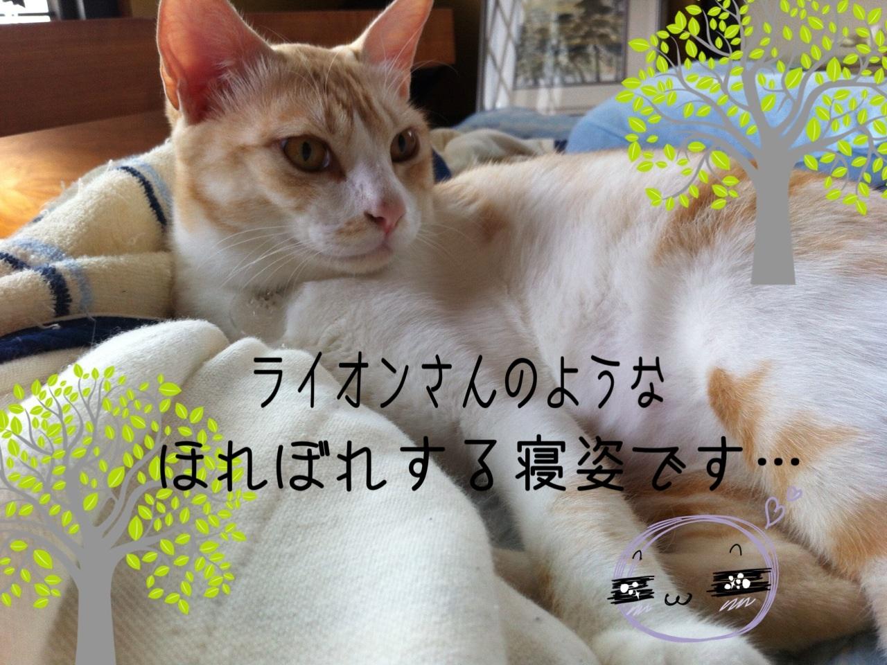 image_20130802234900f2a.jpg