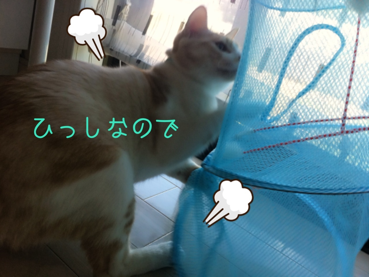 image_20130804201257935.jpg