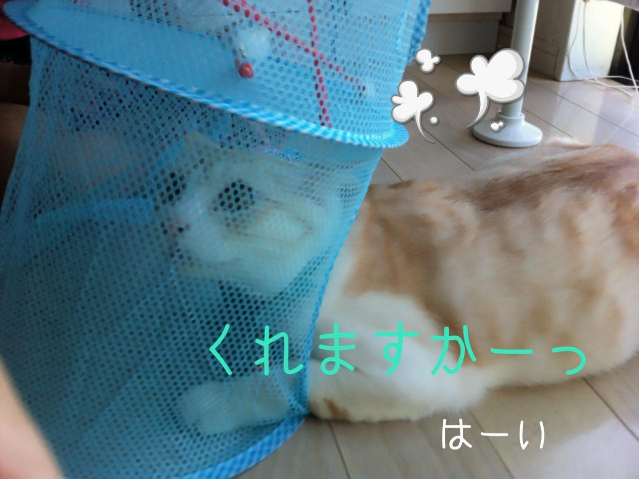 image_20130804201320b6b.jpg