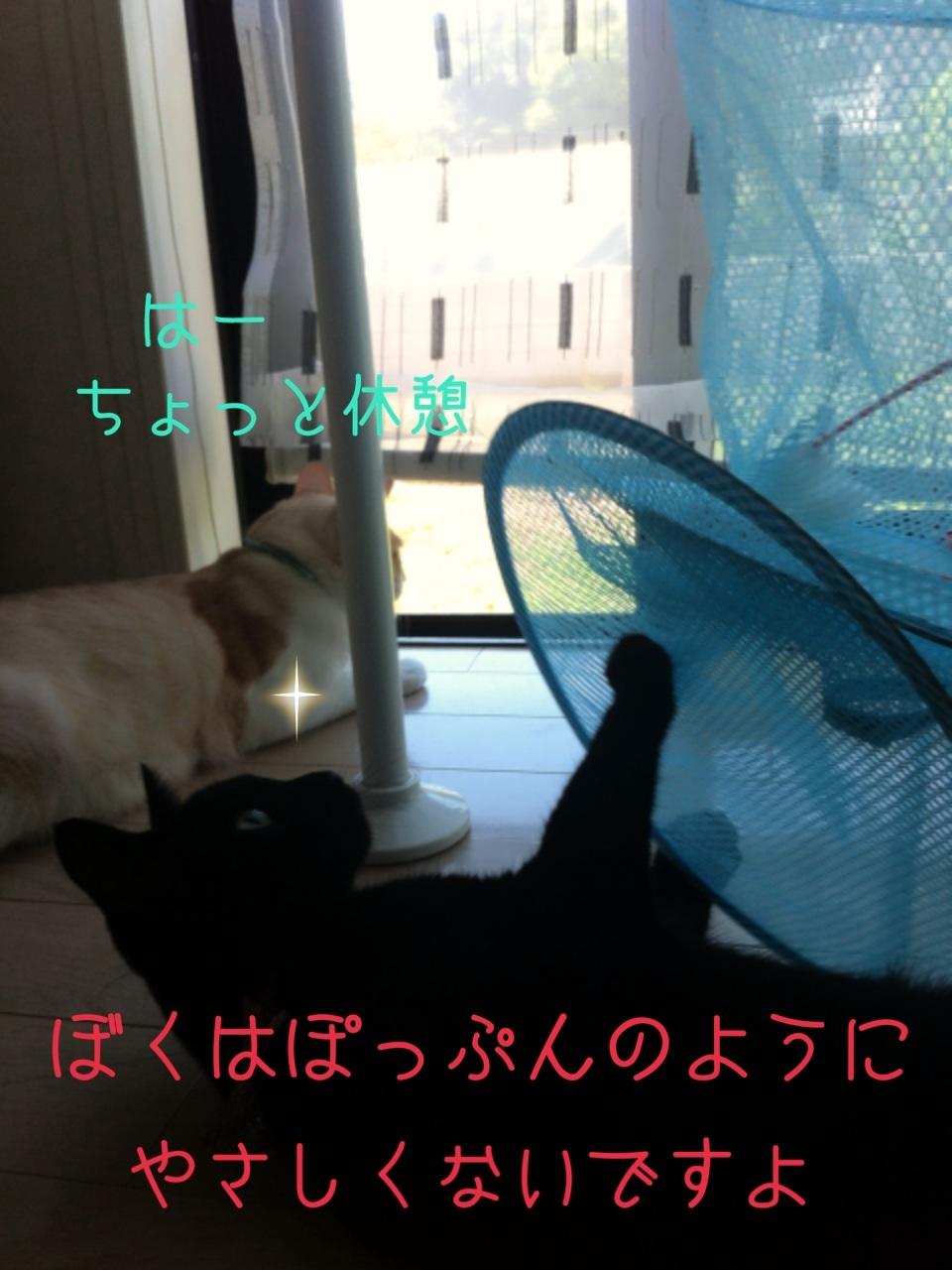 image_201308042013246b5.jpg
