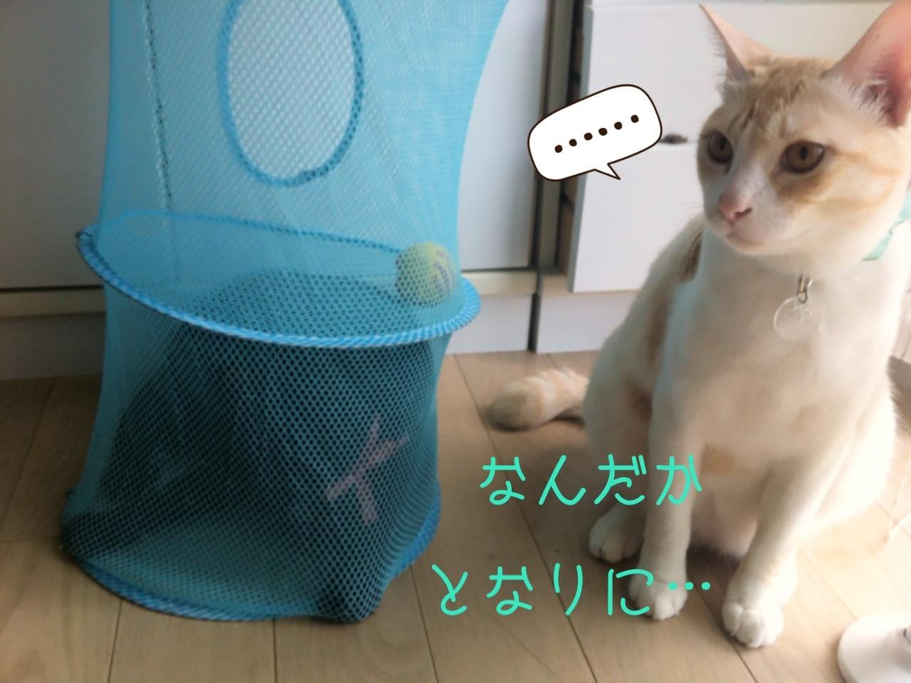 image_20130809211540994.jpg