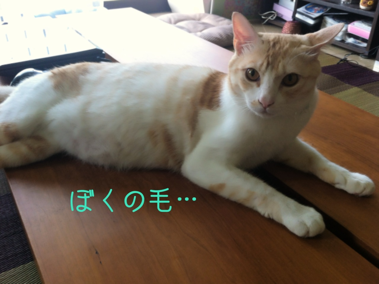 image_20130809211606068.jpg