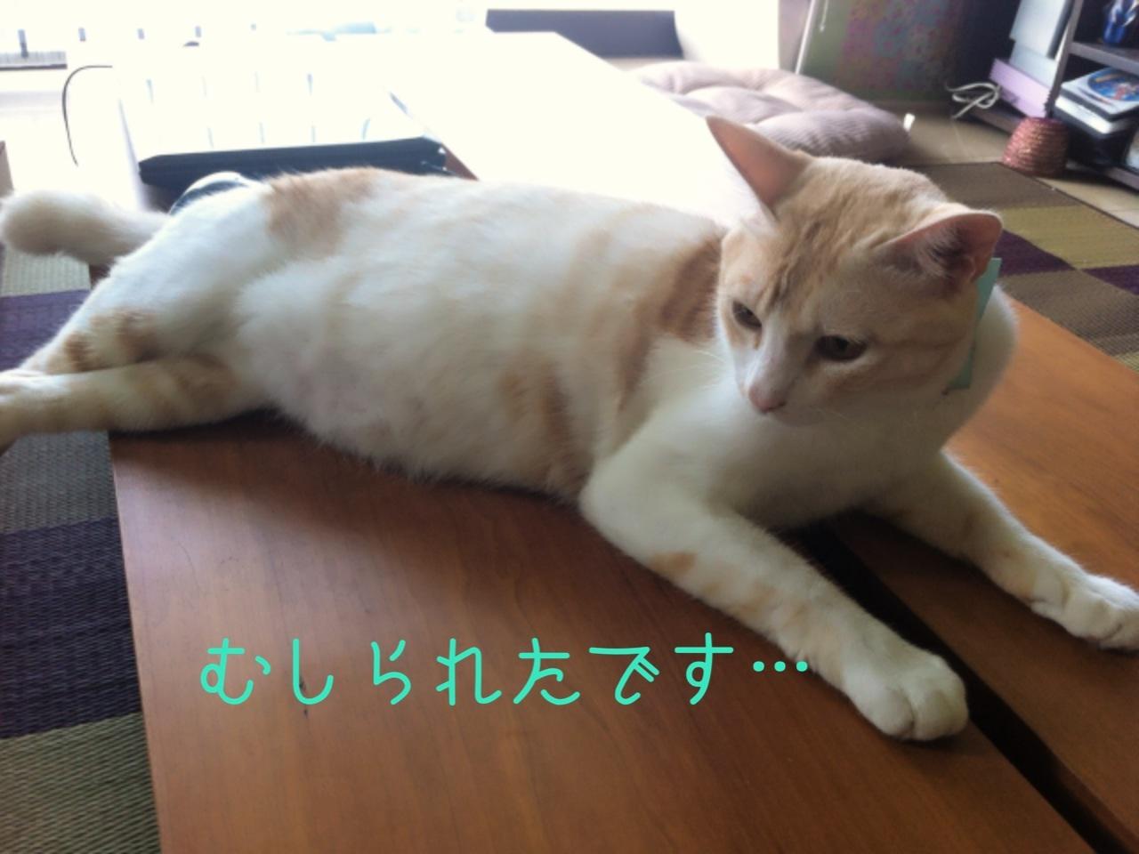 image_20130809211609b70.jpg