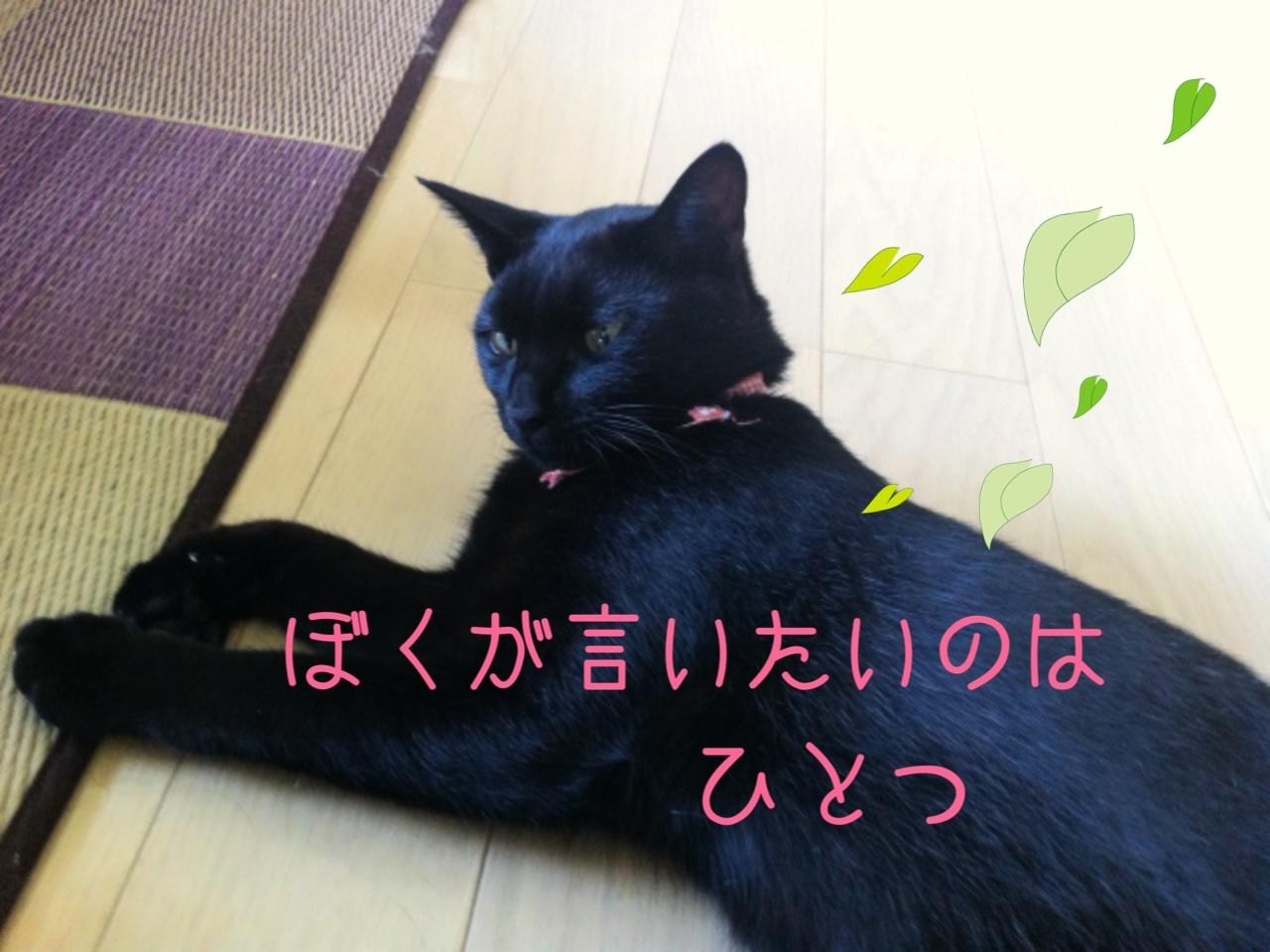 image_20130809211630bce.jpg