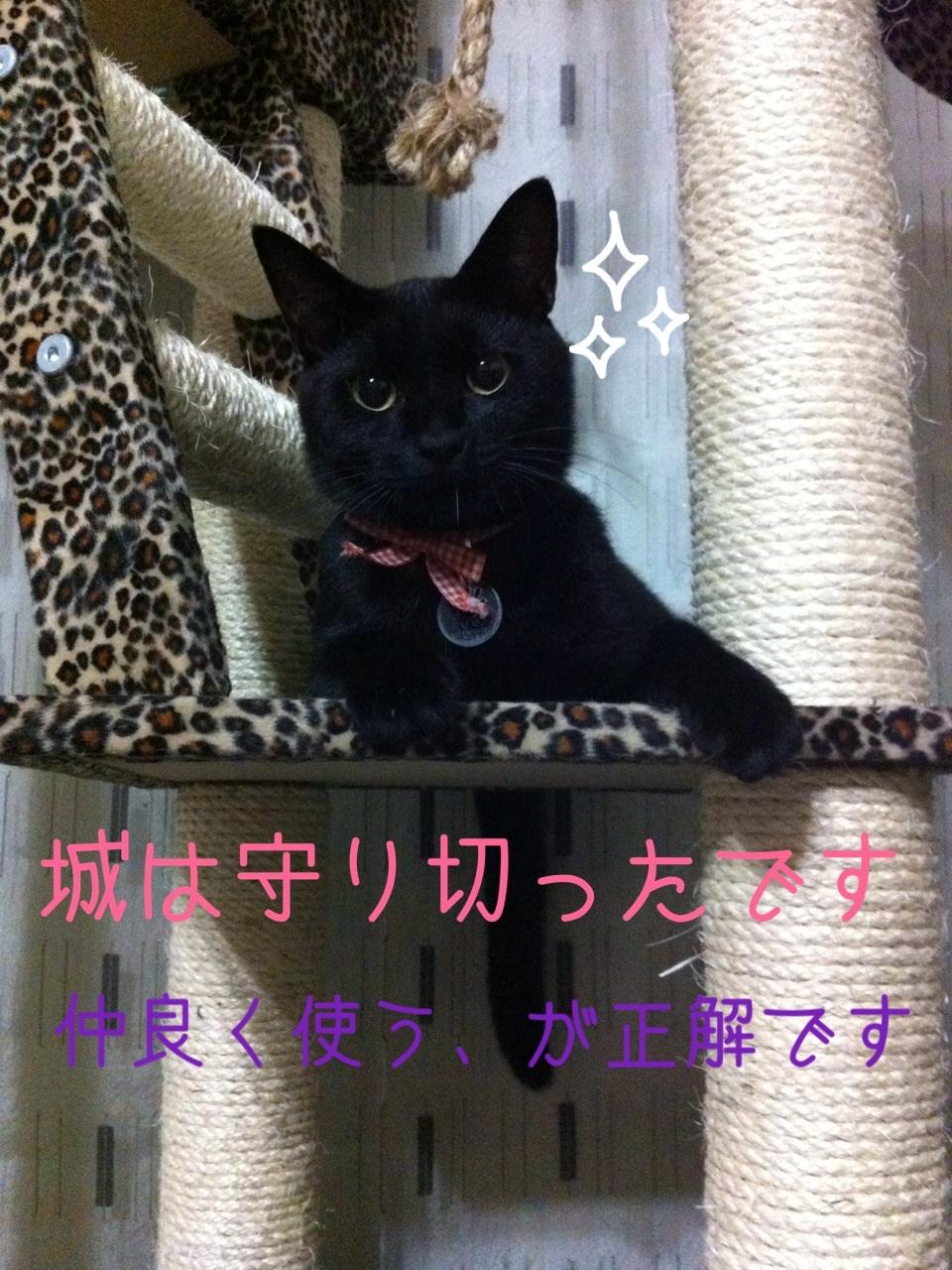 image_2013081322360097c.jpg