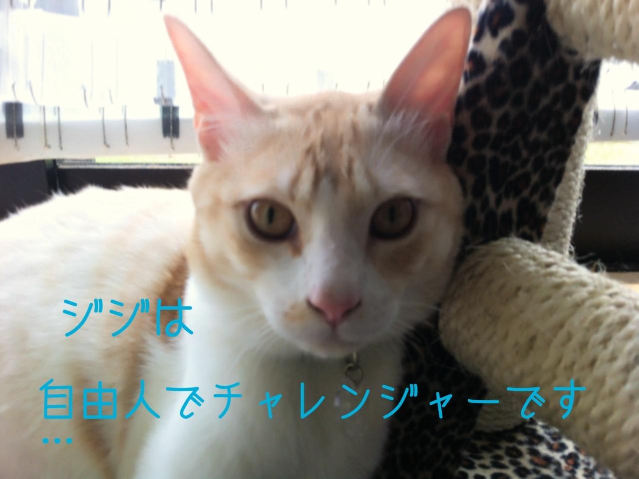 image_2013081622585734b.jpg
