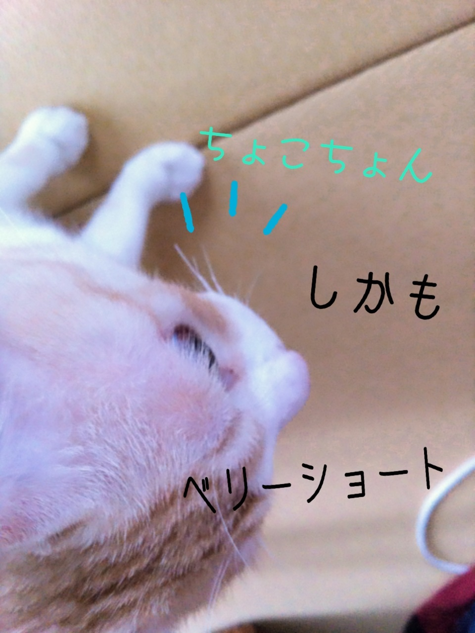 image_20130824071419198.jpg