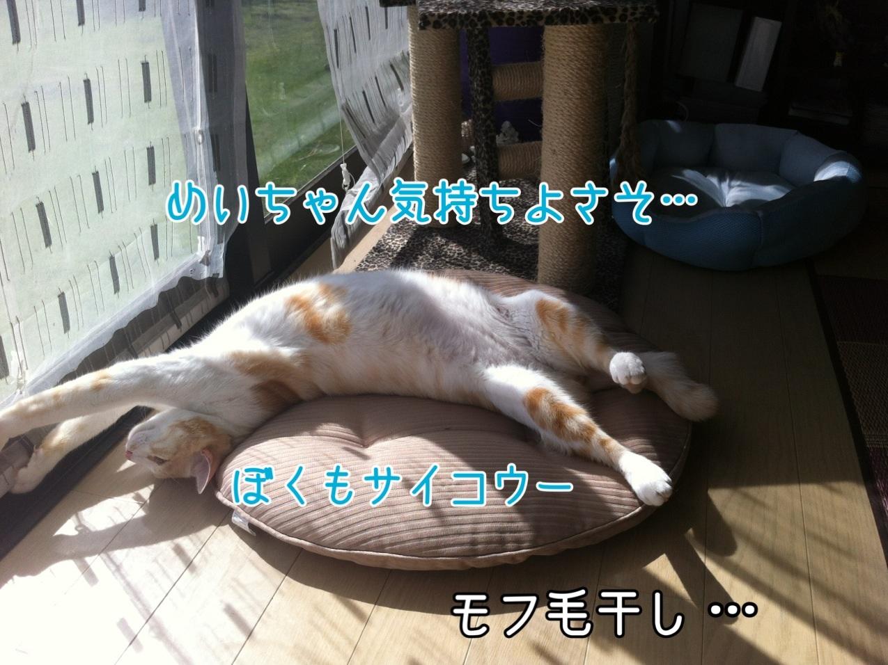 image_2013092222363520c.jpg