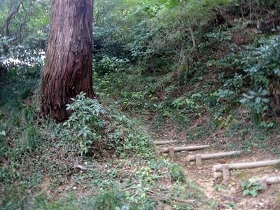 唐沢山城2