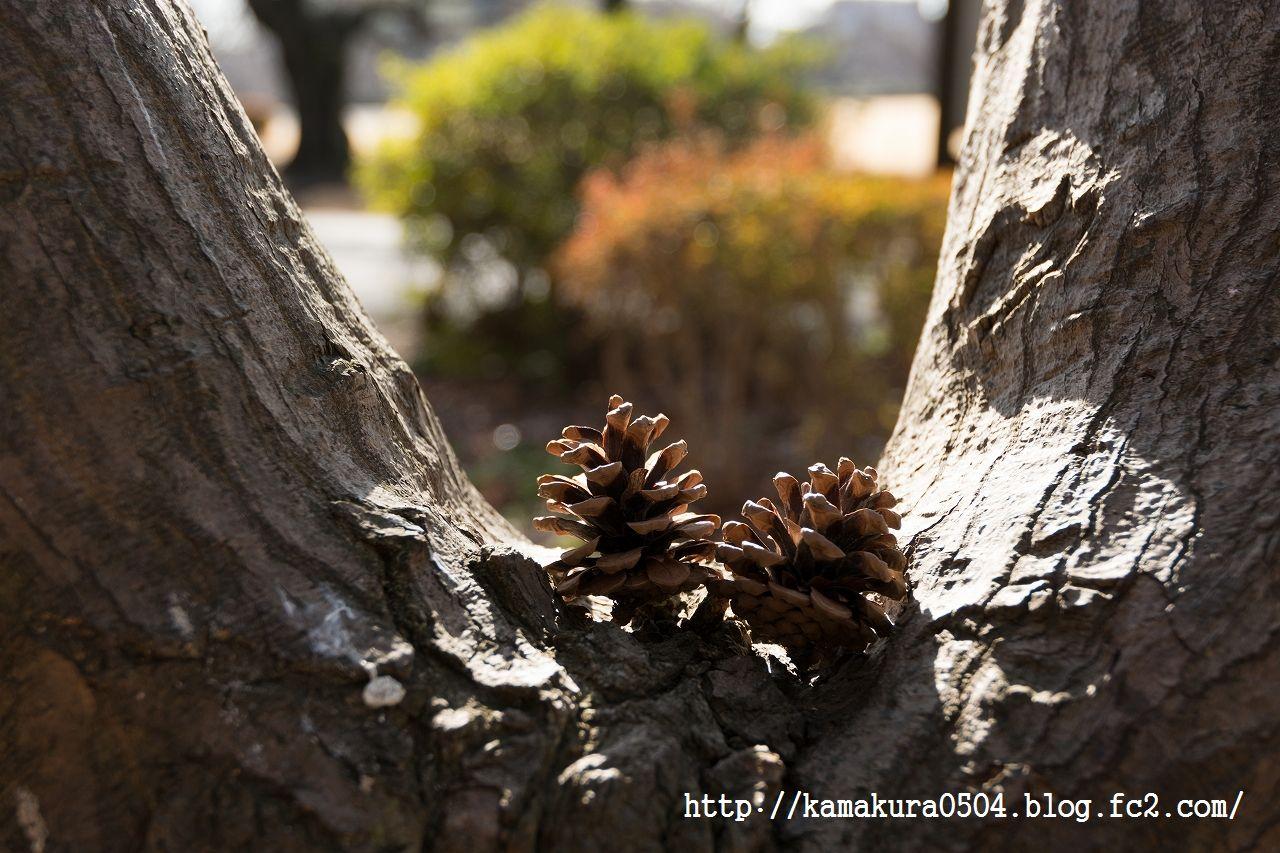 DSC_3580LR_blog_20140131_16-35.jpg
