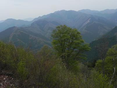 岩茸石山から川苔山