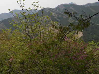 4月の武甲山