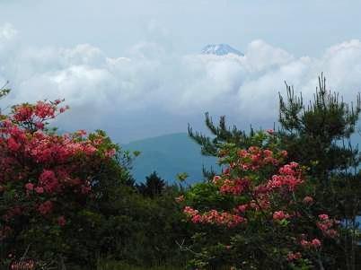 富士山レンゲツツジ