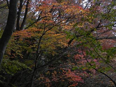 ロックガーデン分岐付近の紅葉