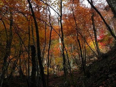 西沢渓谷流域の紅葉