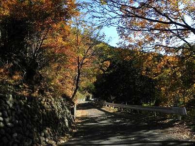 盆堀林道1